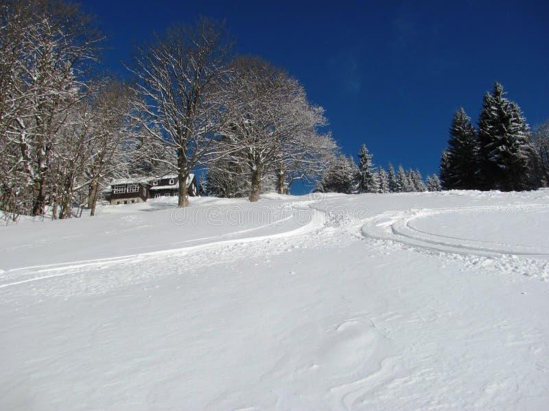 Trilhas do esqui na neve fresca imagem de stock