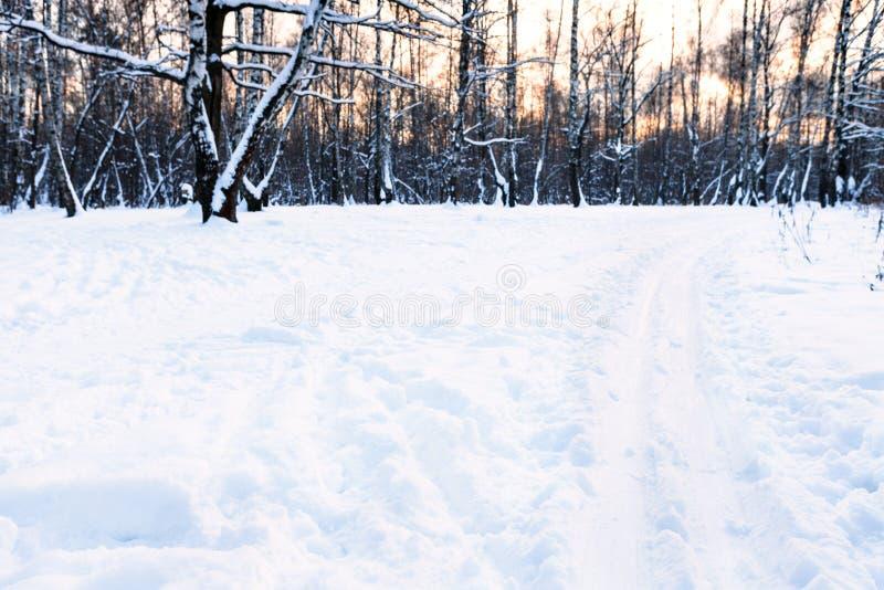 Trilhas do esqui no prado coberto de neve de superfície no parque foto de stock royalty free