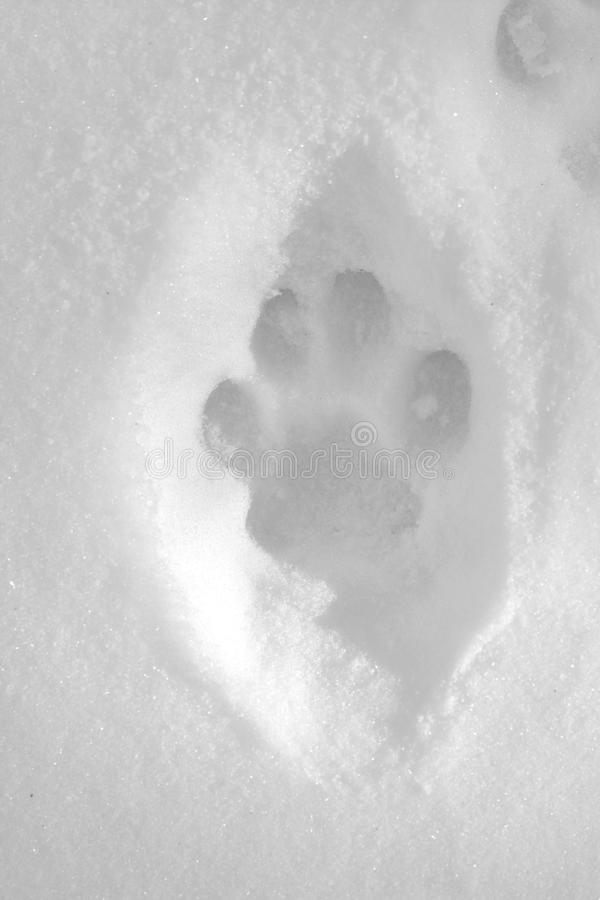 Trilhas do lince na neve fotografia de stock royalty free