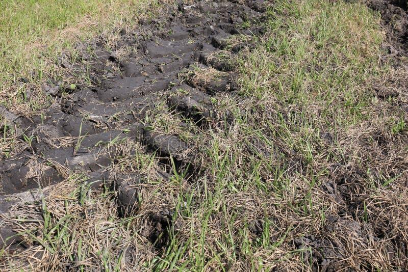 Trilhas do pneu do trator no campo com lama imagens de stock