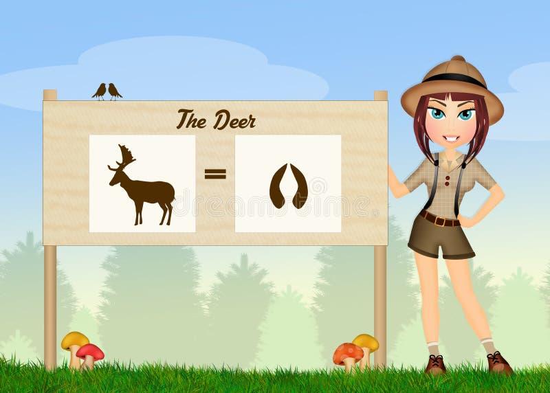 Trilhas dos cervos nas madeiras ilustração do vetor