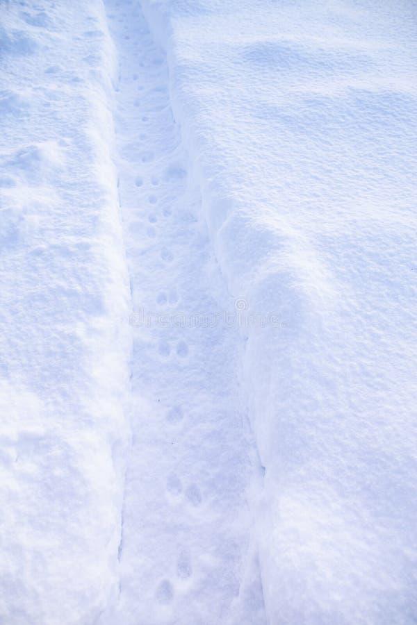 Trilhas frescas do gato no trajeto cancelado da neve, no fundo dos montes de neve foto de stock