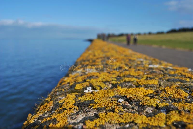 Trilhos com musgo e o líquene alaranjados, detalhe macro, costa escocesa imagens de stock royalty free