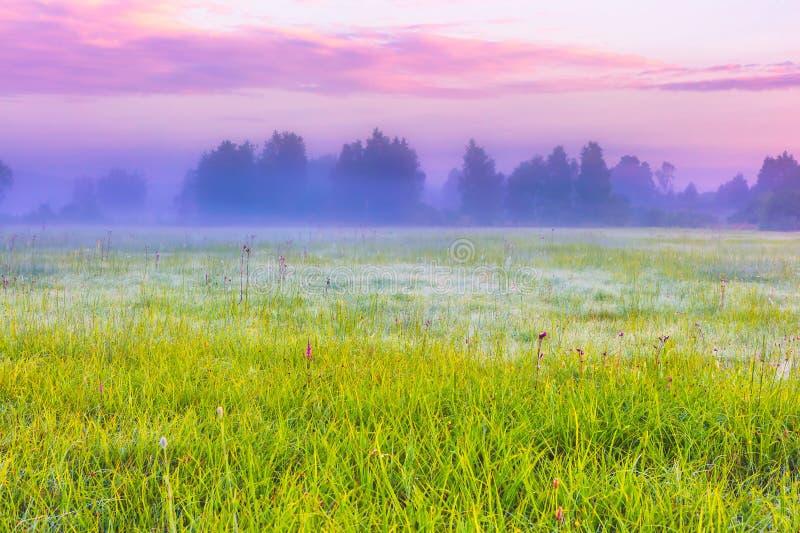 Trillend landschap met mistige weide in Polen stock afbeelding