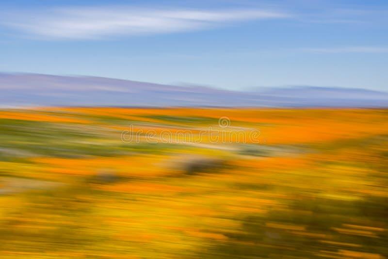 Trillend Wildflower-Woestijnlandschap met Blauwe Hemel die Motieonduidelijk beeld voor Abstracte Kleurenstudie gebruiken royalty-vrije stock foto's