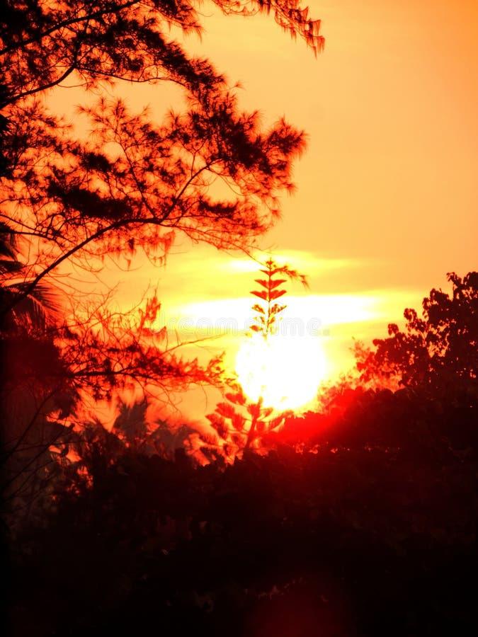 Trillend zonlicht met oranjerode hemel tijdens schemeringuren van ochtendzonsopgang en avondzonsondergang met bomen stock afbeeldingen