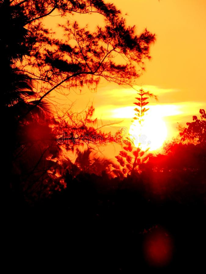 Trillend zonlicht met oranjerode hemel tijdens schemeringuren van ochtendzonsopgang en avondzonsondergang met bomen royalty-vrije stock foto