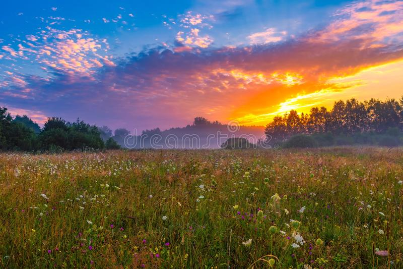 Trillende de zomerzonsopgang over mistige, magische weide royalty-vrije stock fotografie