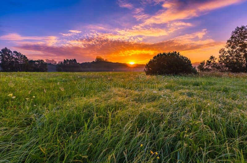 Trillende de zomerzonsopgang over mistige, magische weide stock foto