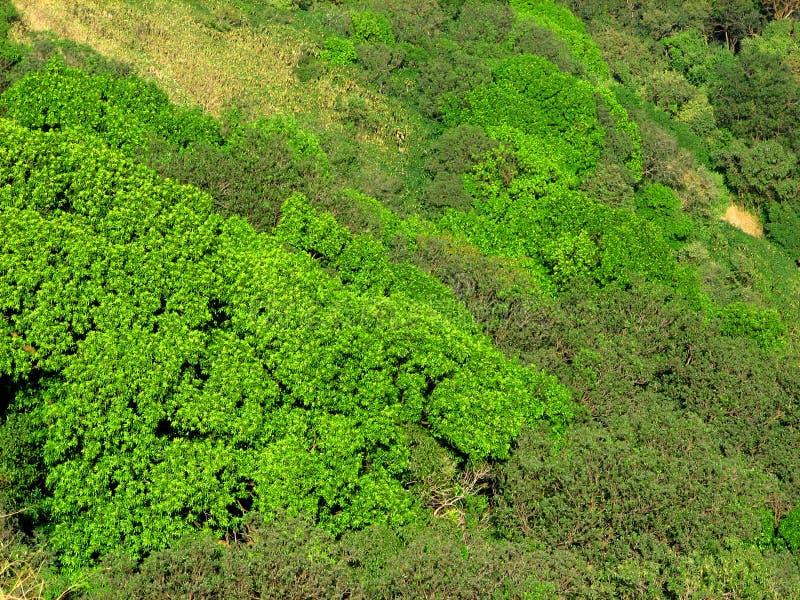 Trillende Groene Schaduwen stock fotografie