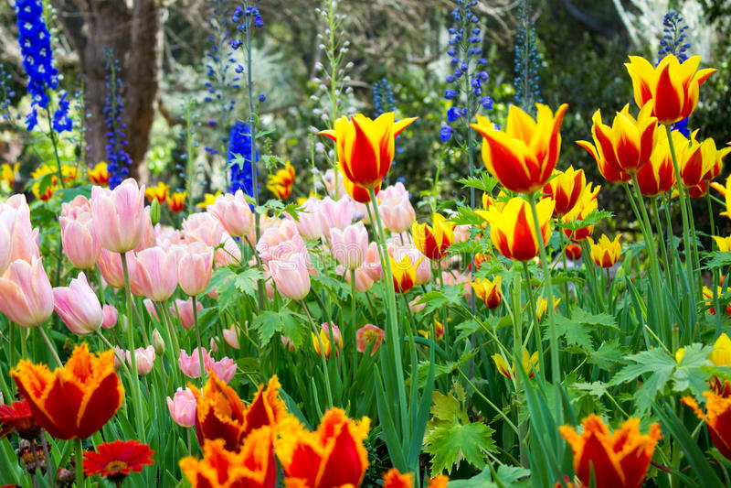 Trillende Tulip Garden stock foto's