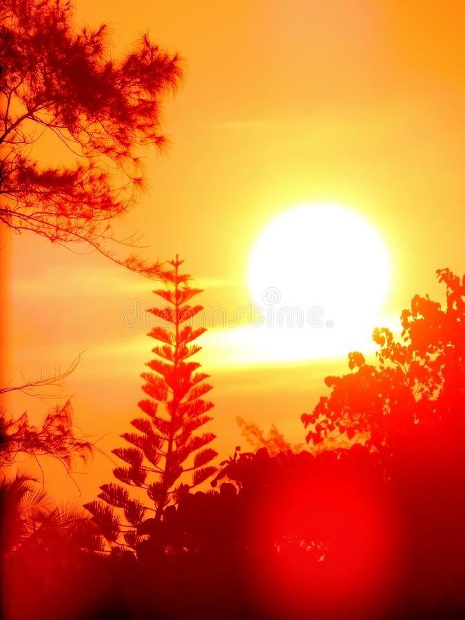 Trillende zonneschijn met oranje hemel tijdens schemeringuren met extreme zonnegloed stock afbeeldingen