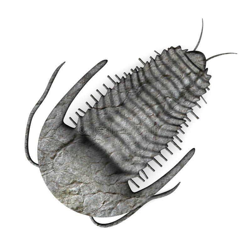 Trilobite illustration libre de droits