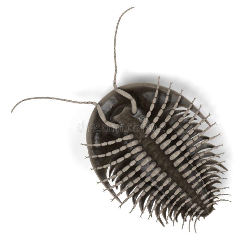 trilobite illustration de vecteur