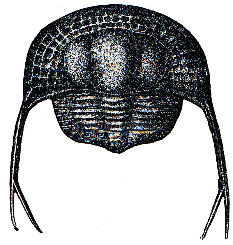 Trilobite Trinucleus Pongerardi foto de stock royalty free