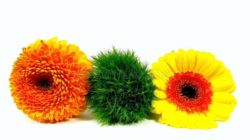 Trilogy. A lovely trilogy of flowers stock photography