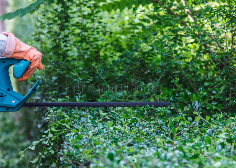 Download Trim Hedge Stock Photography - Image: 30375462