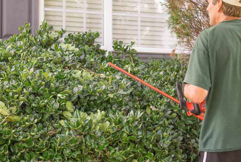Trim the hedges. Man in front of house trimming the hedges with electric edger stock images