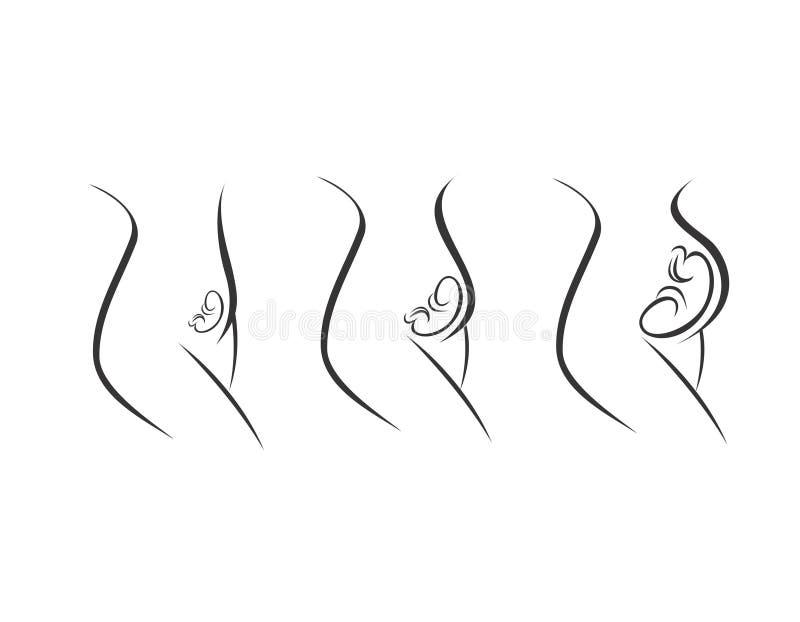 Trimestres del embarazo - etapas de desarrollo stock de ilustración