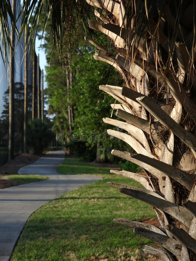 Trimmed Brown Palm Bark Branches Landscaping. Feature next to cement sidewalk path royalty free stock photos