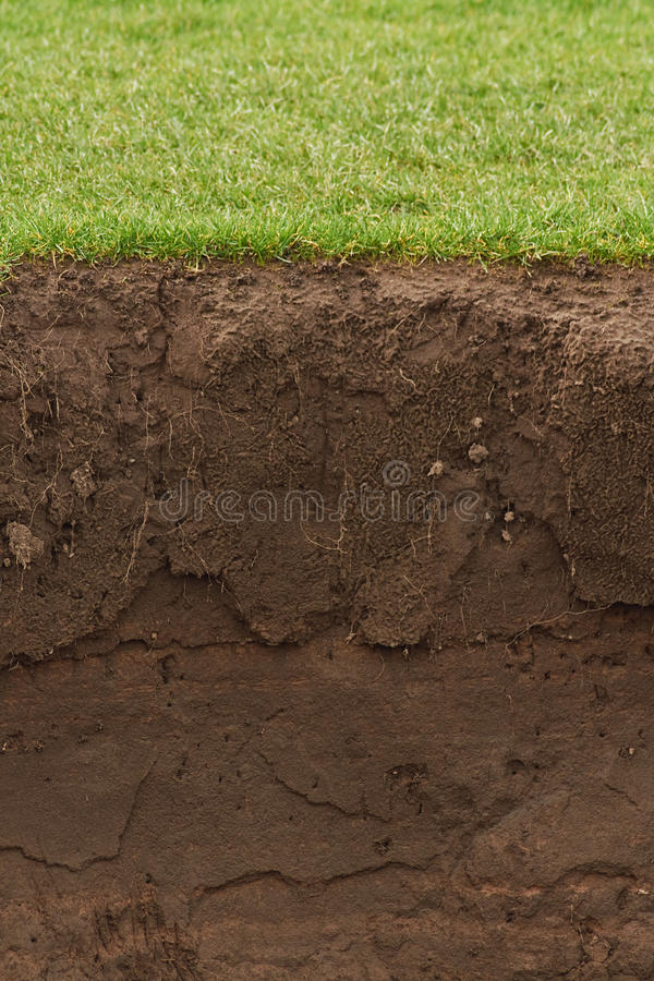Trimmed Grass over exposed soil royalty free stock photography