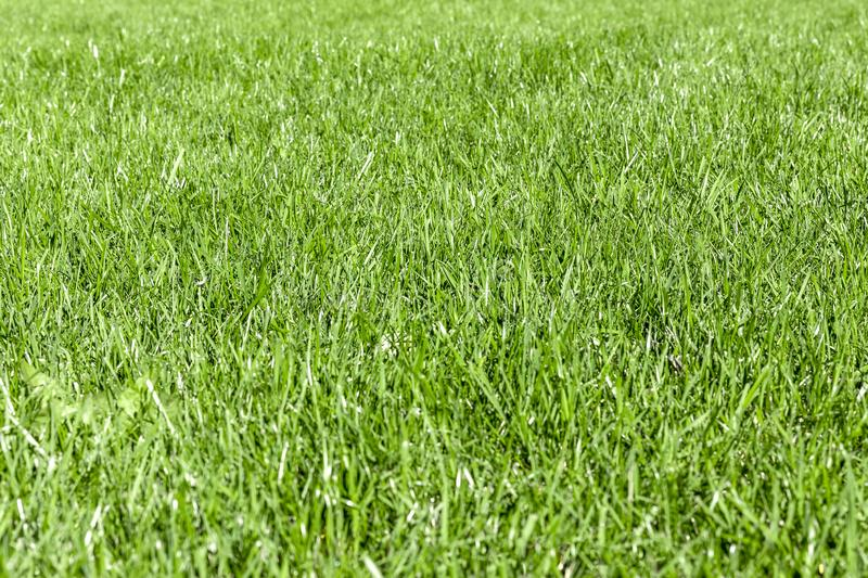 Trimmed thick green grassy lawn background. Top view and side view. Focus on the center.  royalty free stock photos