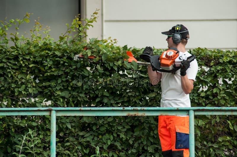 Trimmer de haie professionnel de participation de jardinier dans des ses mains image stock