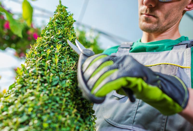 Trimming and Shaping Plant stock images