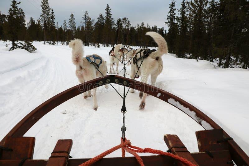 Trineo de perro fotografía de archivo