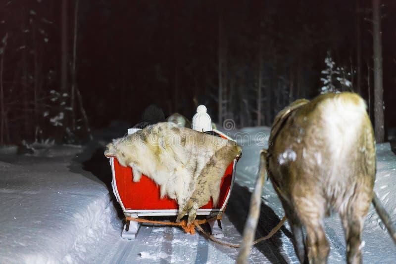 Trineo del reno de la gente en el safari de la noche en Laponia Finlandia fotografía de archivo libre de regalías
