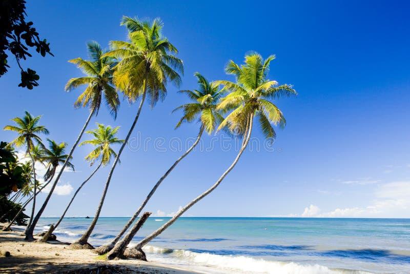 trinidad obraz royalty free