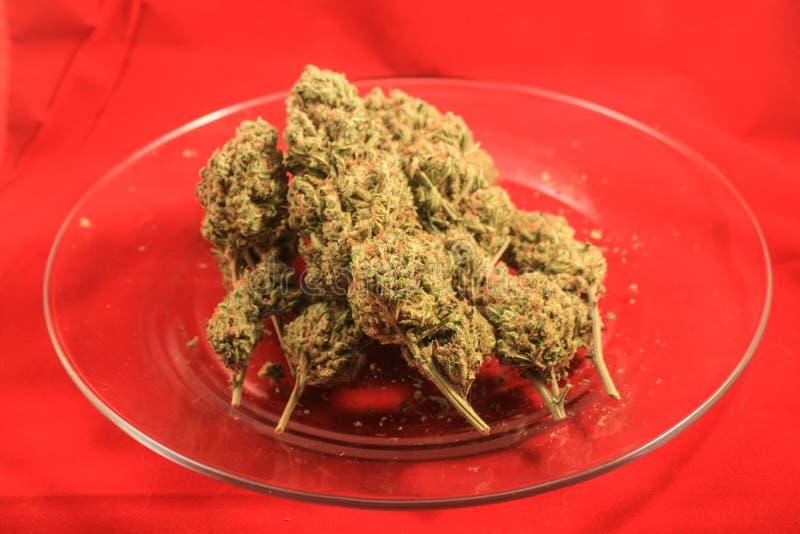 Trio av medicinska cannabisknoppar royaltyfria bilder