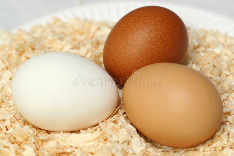 Trio delle uova fotografie stock