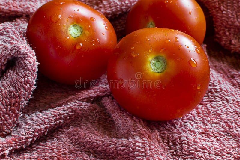 Trio des tomates humides sur un tissu image libre de droits
