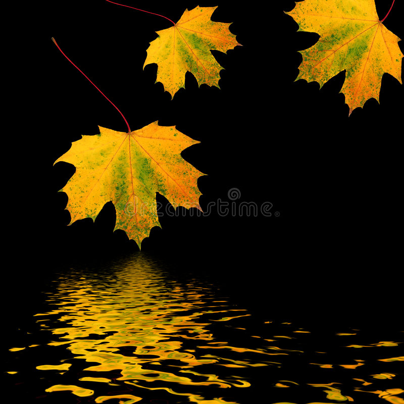 Download Trio Of Golden Leaves Royalty Free Stock Photos - Image: 5308278