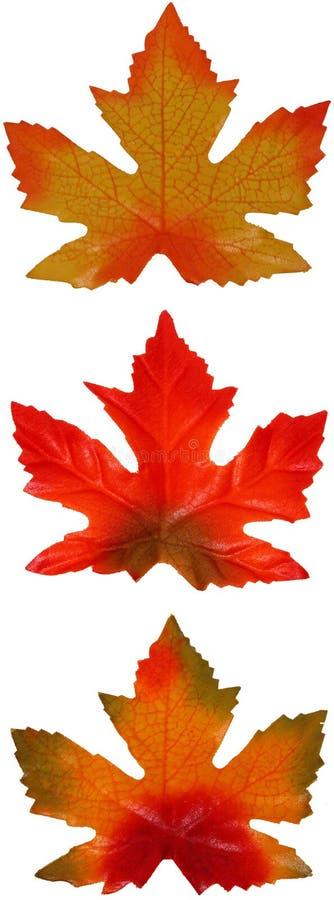 trio klonów liściach obraz royalty free