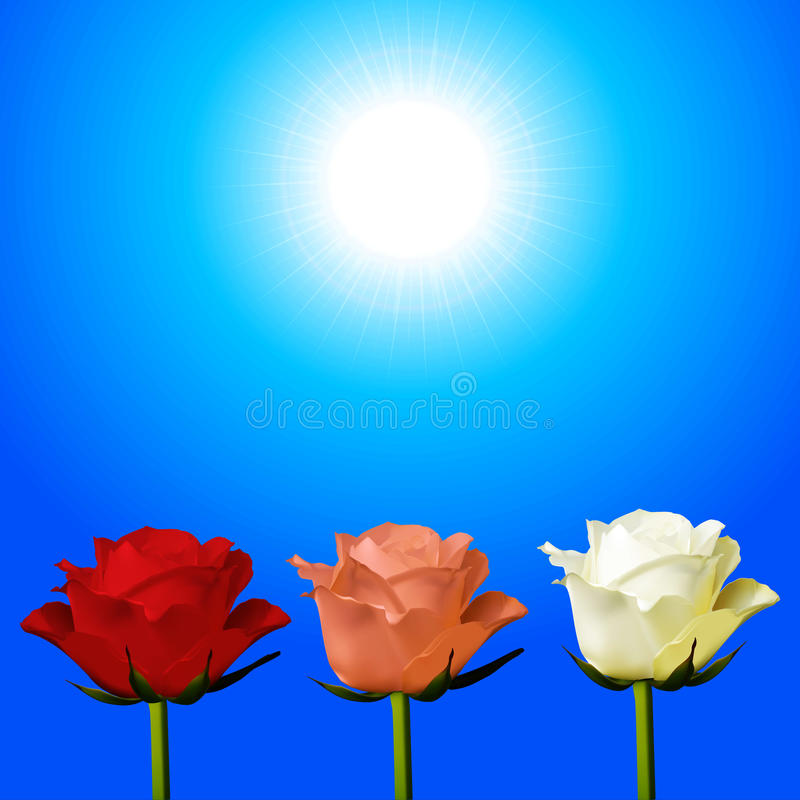 Trio of red pink and white roses over sunny sky royalty free illustration