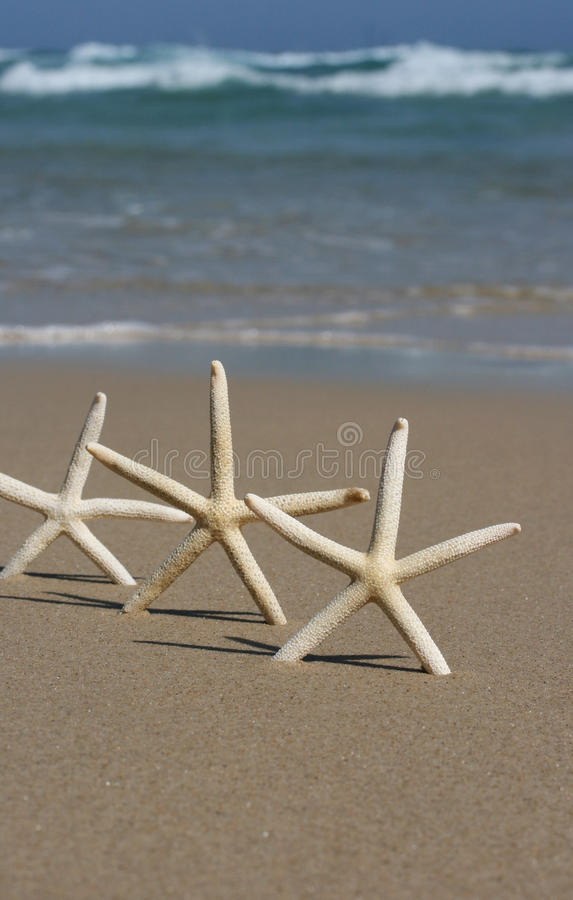 Trio of star fish royalty free stock images