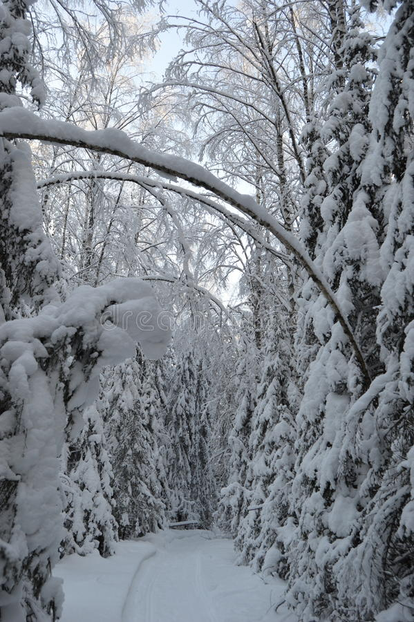 Triomphe in winter forest royalty free stock photos