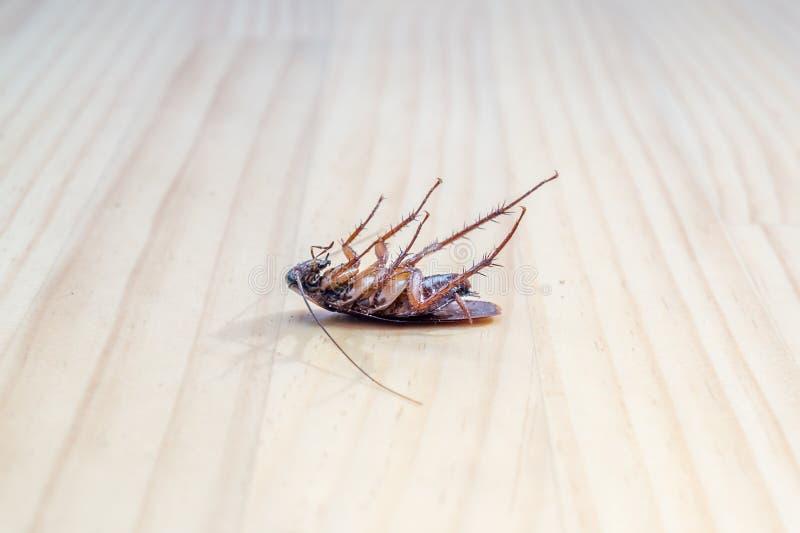 Triotto morto sul pavimento di legno per uso come concetto di controllo dei parassiti fotografia stock libera da diritti