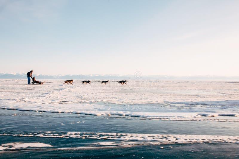 Trip sled dogs Husky stock photos