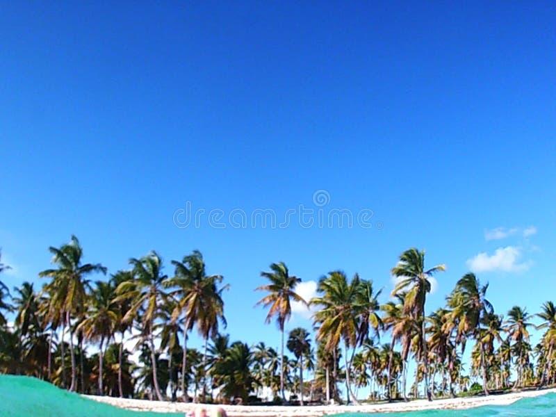 Beach of Saona island, Dominican Republic. Trip to Saona island, caribbean sea, exotic destination, vacation holiday, palm trees royalty free stock images