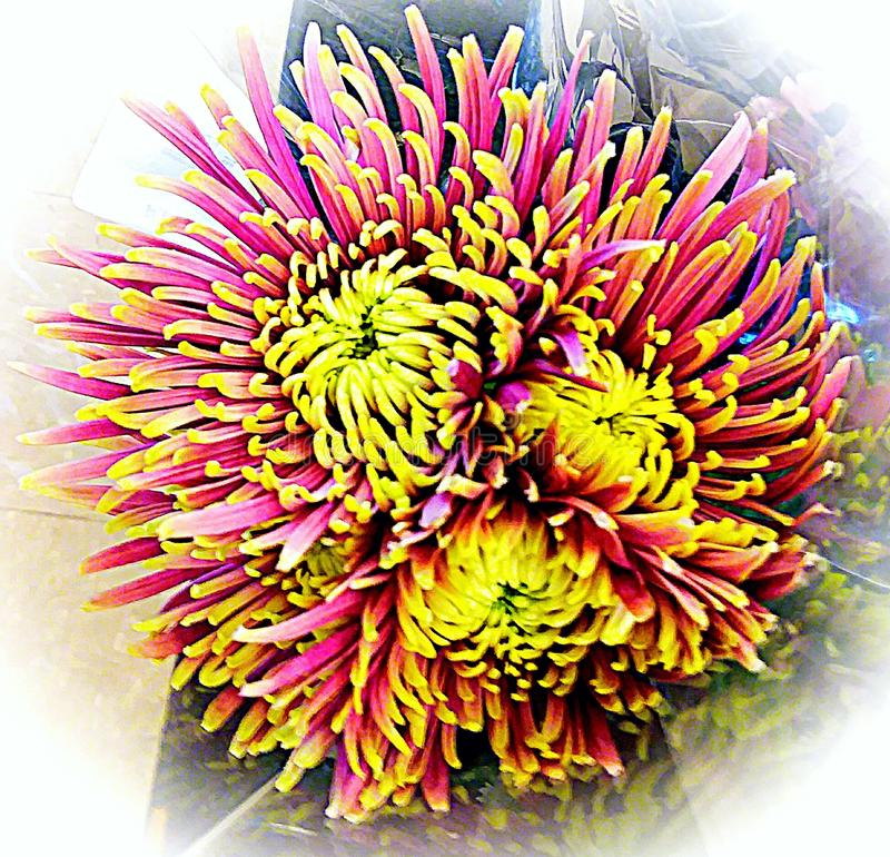 Trippy flower royalty free stock image