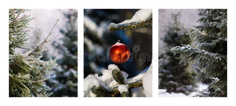 Triptychon - Weihnachtswald stockbild