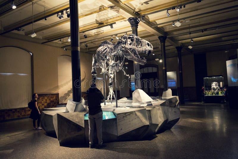 Tristan Otto Tyrannosaurus rex kościec przy historii naturalnej muzeum - Muzealny futerkowy Naturkunde w Berlin, Niemcy fotografia stock