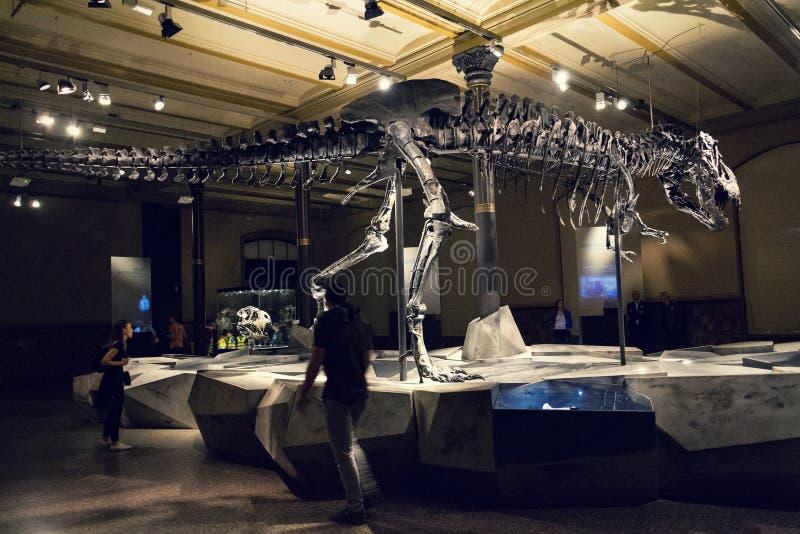 Tristan Otto Tyrannosaurus rex kościec przy historii naturalnej muzeum - Muzealny futerkowy Naturkunde w Berlin, Niemcy obraz stock