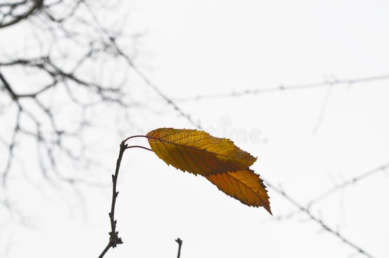 Triste freddo di inverno della foglia di autunno fotografia stock