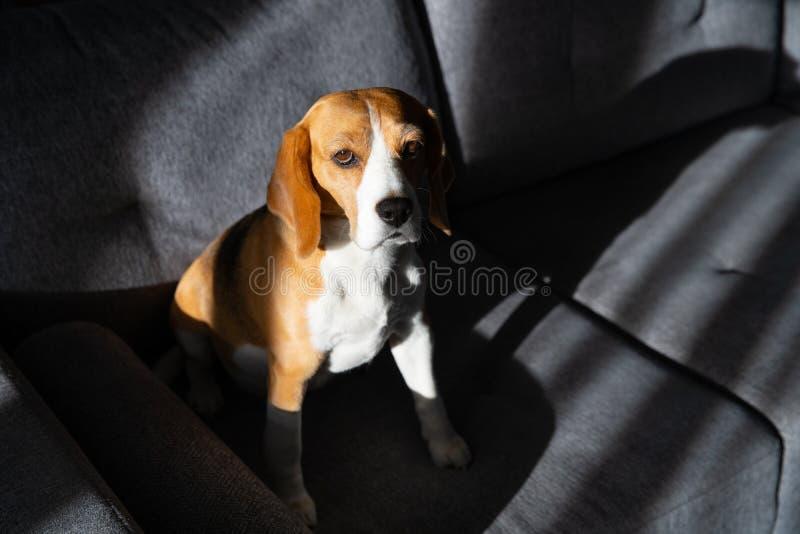 Tristeza del perro imagen de archivo libre de regalías