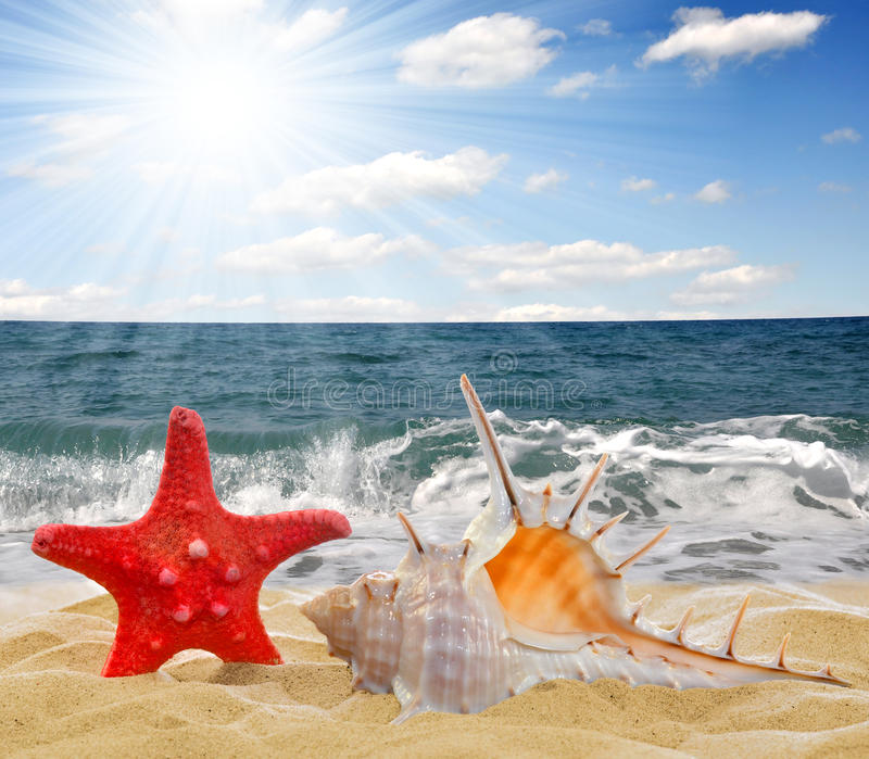 Tritonshornshell mit Starfish stockbilder