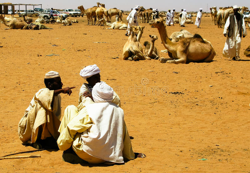 Troca dos camelos no mercado de Omdurman, Khartum, Sudão foto de stock
